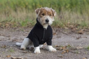 Back on Track Fleece Overall Bianca mit hund sitz