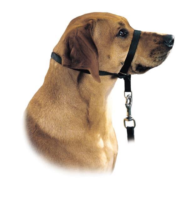 Hunter Ausbildungsgeschirr Follow me am Hund