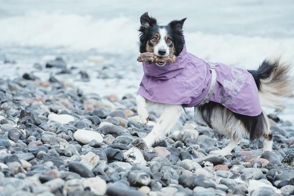 Hurtta Drizzle Coat currant am Hund