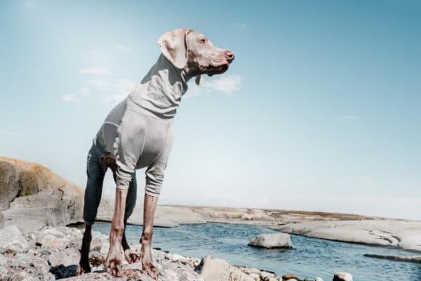 Hurtta Body Warmer am Hund