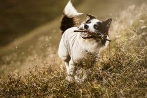 Hurtta Sun & Bug Blocker am Hund Seitenansicht