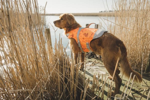 Hurtta Life Savior orange camouflage Schwimmweste am Hund