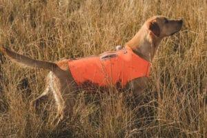 Hurtta Rambler Vest Wanderweste orange am Hund