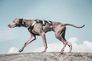 Hurtta Trail Harness Brustgeschirr grau am Hund