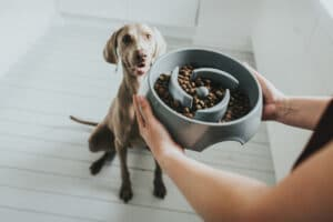 Hunter Anti-Schling Napf Atlanta grau mit Hund sitzend
