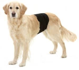 Karlie Gentleman Wrap Plus Rüdenschutzhose am Hund