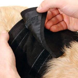 Karlie Gentleman Wrap Plus Rüdenschutzhose am Hund Nahansicht Klettverschluss