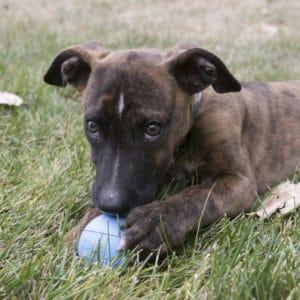 KONG Puppy Ball blau mit Welpe