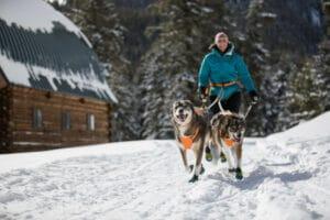 Ruffwear Omnijore Joring System mit Hunden