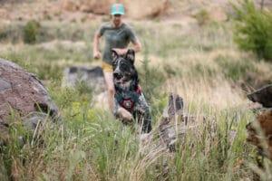 Ruffwear Brush Guard twillight grey am Hund
