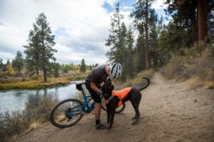 Ruffwear Track Jacket blaze orange am Hund