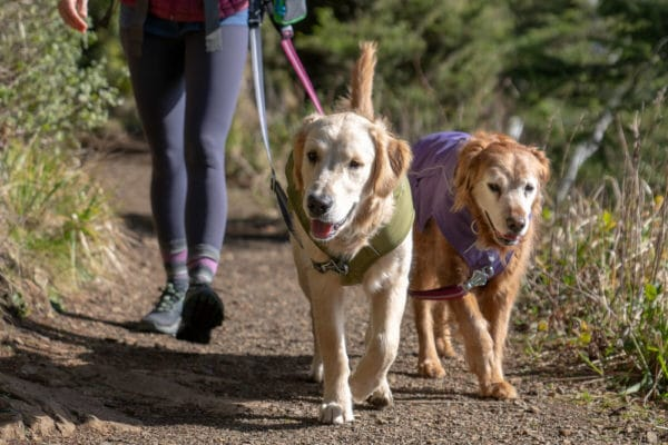 Ruffwear Overcoat Fuse Jacket purple sage am Hund
