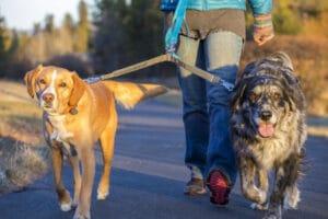 Ruffwear Double Track Coupler Leinenkoppel mit Hunden