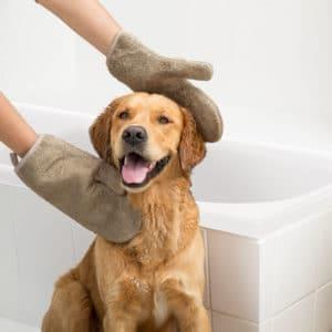 Siccaro Dry Gloves elmwood mit Hund