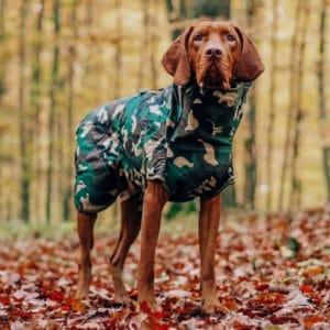 Siccaro Hundetrockenmantel Spirit am Hund im Wald
