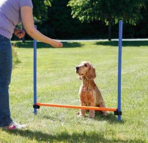 Trixie Agility Hürde aus Kunststoff mit Hund sitzend