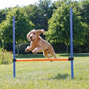 Trixie Agility Hürde aus Kunststoff mit Hund springend