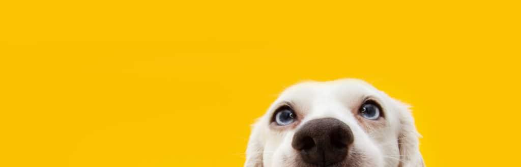 Caninova Kontakt