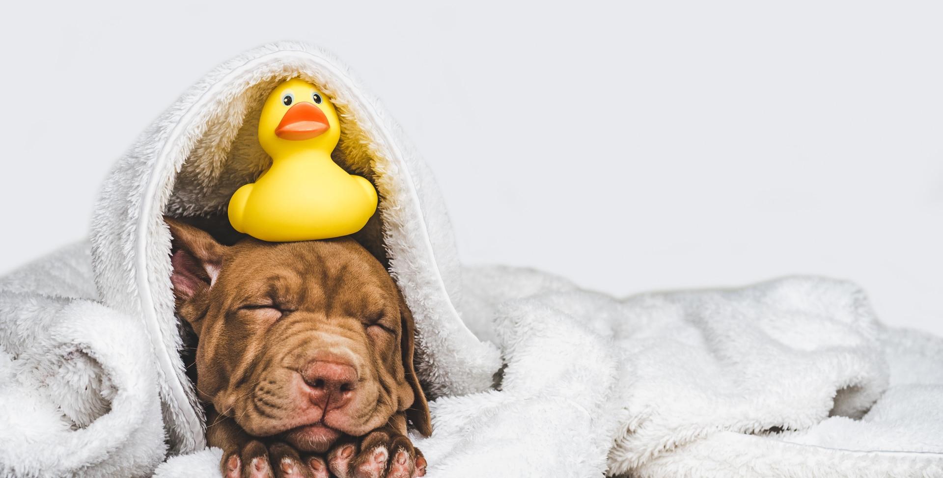 Caninova Unser Anspruch